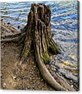 Rooted Acrylic Print