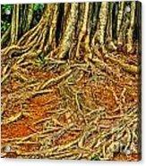 Roots 5 Acrylic Print