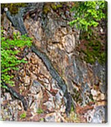 Roots And Rocks Acrylic Print