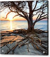 Roots Beach Acrylic Print