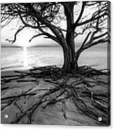 Roots Beach In Black And White Acrylic Print