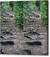 Roots - Cross Your Eyes And Focus On The Middle Image That Appears Acrylic Print