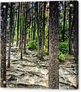 Roots Of Trees Acrylic Print