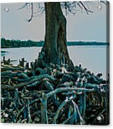 Roots On The Bay Acrylic Print