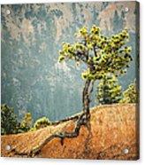 Roots Rock Acrylic Print