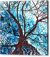 Roots To Branches II Acrylic Print
