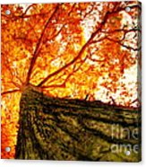 Roots To Branches IIi Acrylic Print
