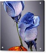 Rosa Azul With Orange Acrylic Print