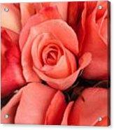 Rosa Central Acrylic Print