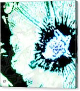 Rosa Sinensis Abstract Acrylic Print