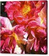 Rose 115 Acrylic Print