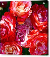 Rose 124 Acrylic Print