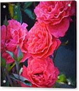 Rose 138 Acrylic Print by Pamela Cooper