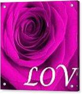 Rose 16 Love Acrylic Print