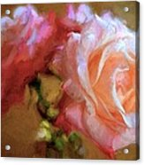 Rose 166 Acrylic Print