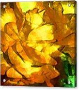 Rose 171 Acrylic Print
