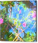 Rose 182 Acrylic Print by Pamela Cooper