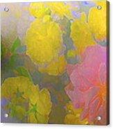 Rose 185 Acrylic Print