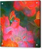 Rose 187 Acrylic Print