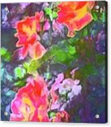 Rose 192 Acrylic Print by Pamela Cooper