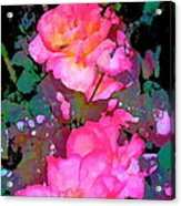 Rose 193 Acrylic Print by Pamela Cooper