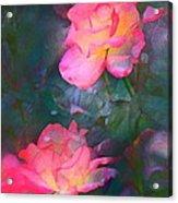 Rose 194 Acrylic Print by Pamela Cooper