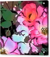 Rose 197 Acrylic Print by Pamela Cooper