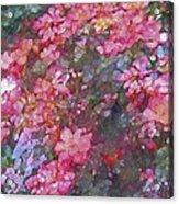 Rose 199 Acrylic Print by Pamela Cooper