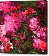 Rose 202 Acrylic Print by Pamela Cooper