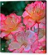 Rose 203 Acrylic Print