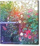 Rose 205 Acrylic Print