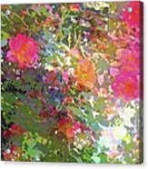 Rose 207 Acrylic Print