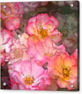 Rose 210 Acrylic Print by Pamela Cooper
