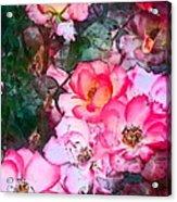 Rose 239 Acrylic Print
