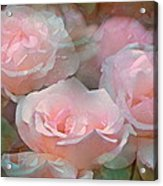 Rose 243 Acrylic Print