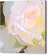 Rose 254 Acrylic Print