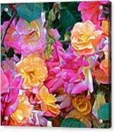 Rose 304 Acrylic Print