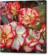Rose 305 Acrylic Print