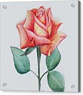 Rose 4 Acrylic Print by Nancy Edwards