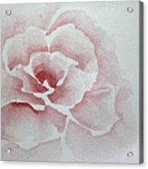 Rose Absolute Acrylic Print