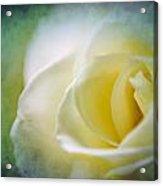 Rose Again Acrylic Print