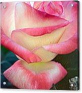 Rose Among The Thorns Acrylic Print