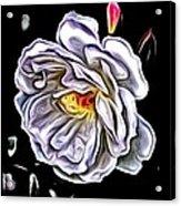 Rose An Petals  Acrylic Print