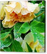 Rose And Leaves On A Rainy Day Acrylic Print