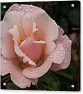 Rose And Rain - Pale Pink Raindrops Acrylic Print