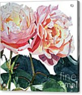 Pink And Yellow Rose Anne Acrylic Print