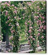 Rose Arbor Acrylic Print