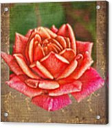 Rose Blank Greeting Card Acrylic Print