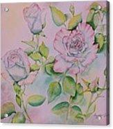 Rose Bloom Acrylic Print