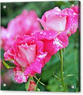 Rose Bonbons Acrylic Print